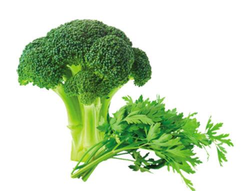 Soupe brocoli persil