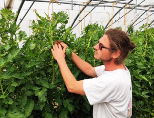 Découvrez Sébastien, producteur de tomate dans le Nord
